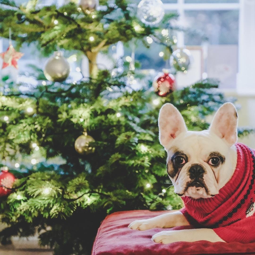 Christmas Jumper - The Hibbs Lupus Trust